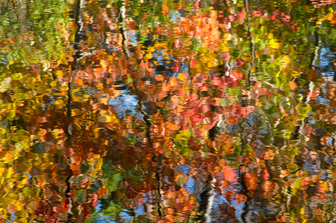 AutumnAbstract